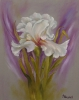 Iris 40 x 50