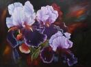Iris Öl 8o x 60